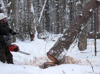 Северный архангельский лес – материал мечты.